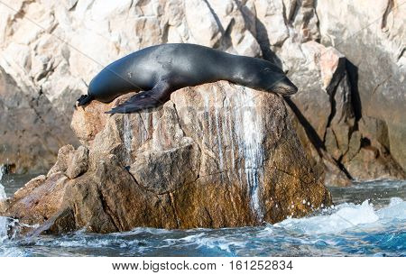 California Sea Lion shining on the sun on the Pinnacle rock of Lands End at Cabo San Lucas Baja Mexico BCS