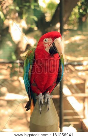 Albion, Mauritius - June 19, 2016: Scarlet Macaw, or more commonly known as a Parrot. This was taken in a safari/aviary in Mauritius.