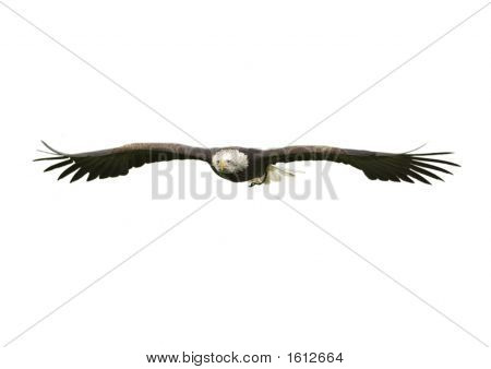 Bald Eagle Cut Out