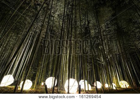 Lantern light display in a bamboo forest for the night illumination festival in Kyoto, Japan