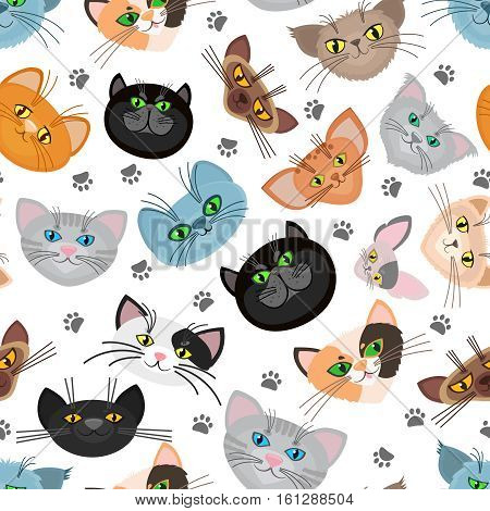 Cat face vector background with cat paws. Cats muzzle and trail paw of cats. Vector illustration