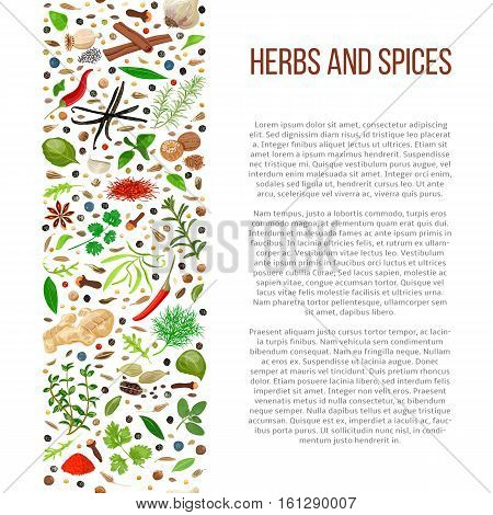 Popular culinary herbs and spices set in column with description. Benefits of cooking spices in informative poster with text. Design for cosmetics, store, market, health care products, flyer, banner
