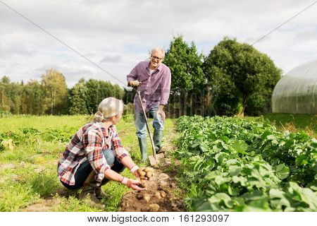 farming, gardening, agriculture and people concept - senior couple planting potatoes at garden or farm
