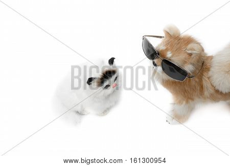 doll dog wearing sunglasses and cat cute beautiful on white background with copy space for add text