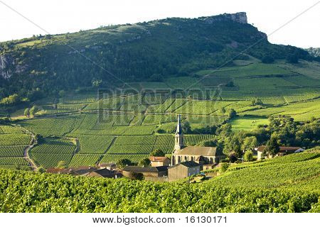 Vergisson with vineyards, Burgundy, France poster