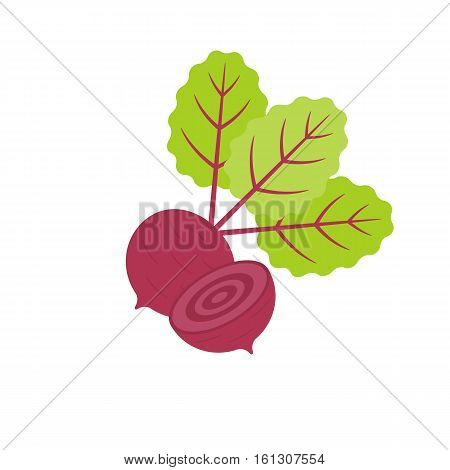 Isolated Red beetroot whole, cut, sliced, flat design vector