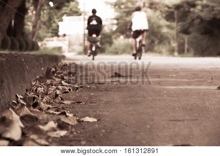 Falling leaves on the ground. Autumn leaves background