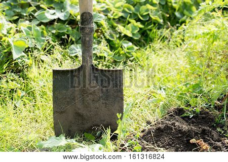 Shovel in the ground photo for you