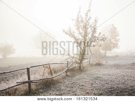 Foggy morning the ground is covered with frost