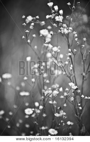 Artistic black and white flowers
