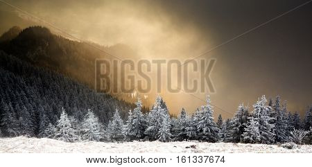 amazing winter sunrise through fog in the mountains above snowy fir trees. Dramatic wintry scene. Natural park. Carpathian, Romania, Europe. Happy New Year
