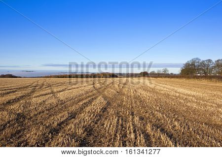Autumn Woods And Straw Stubble