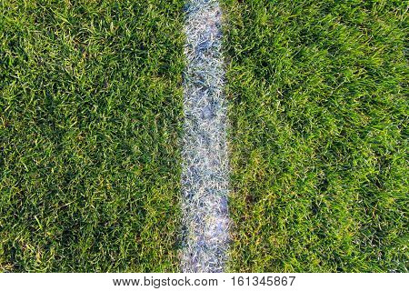 White line on green football field background