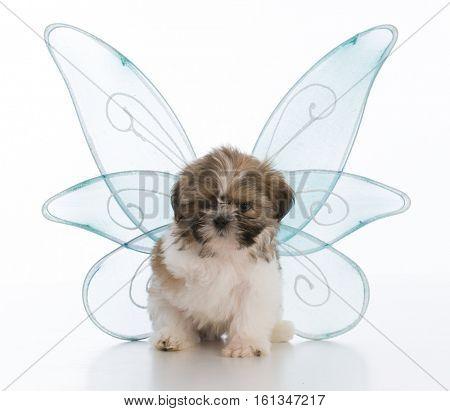 shih tzu puppy with three legs dressed like an angel