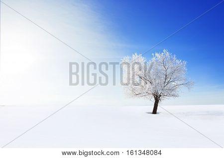 Alone Frozen Tree On Winter Field And Blue Sky