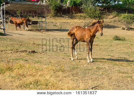 Brown foal in corral on a mountain pasture