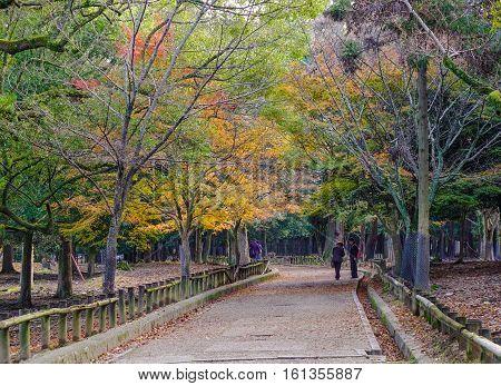 Autumn Scenery In Kansai, Japan