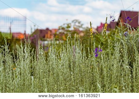 Wild grass on a blurred background of garden plots. Limited depth field.
