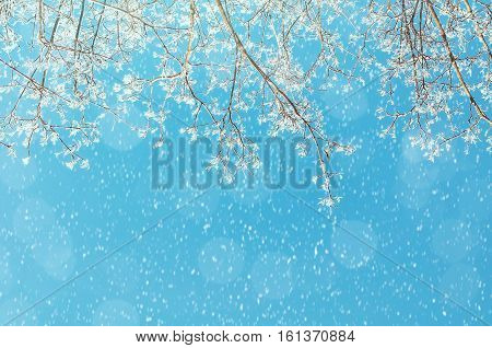 Winter background - frosty branches of the winter tree against the blue winter sunny sky under falling winter snow. Winter nature background with free space for text