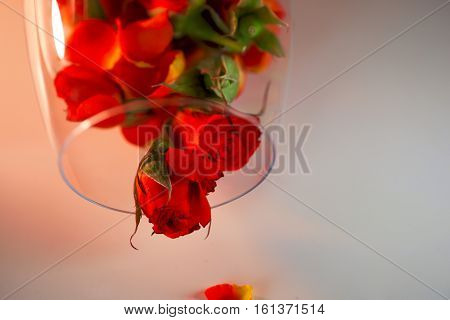 Glass vase filled with red rose petals. White background. Aromatherapy concept. White background. Aromatherapy concept. Romantic background