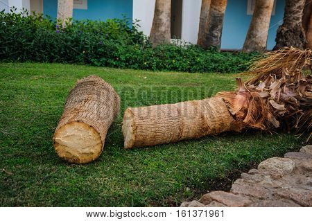cut palm tree destruction forest natural red sea tropical