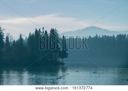 dark calm blue winter foggy lake with swans