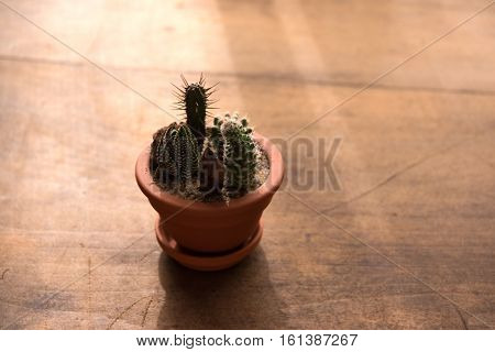 Dry or arid environment. A small pot of cactus, growing  in a very dry environment with strong sunlight. Climate change concept image.