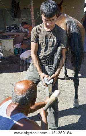 Istanbul Turkey - September 29 2013: Istanbul Buyukada working farrier. Farrier Horse foot nailing. In simple terms this farrier can be defined as a professional who takes care of horses specifically horseshoes. Istanbul Buyukada (Big Island) have hundred
