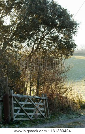 Winter scene of a gateway and track leading into a field on the South Downs in Sussex.