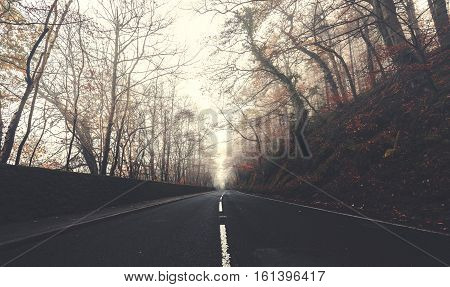 Empty Asphalt Road at Misty Autumnal Morning
