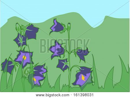 The violet  bluebells on  the green meadow.