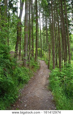 Dirt path going through a tree-filled forest in Canada