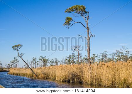 Wetlands in winter at the Mackay Island National Wildlife Refuge located on Knotts Island in North Carolina.