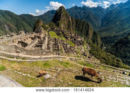View of the Lost Incan City of Machu Picchu near Cusco, Peru. Machu Picchu is a Peruvian Historical Sanctuary. Llamas can be seen on foreground.