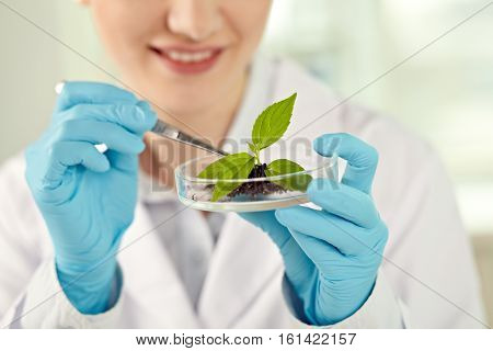 Close-up of petri dish with young plant in female hands