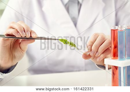 Woman putting a plant into specimen holder