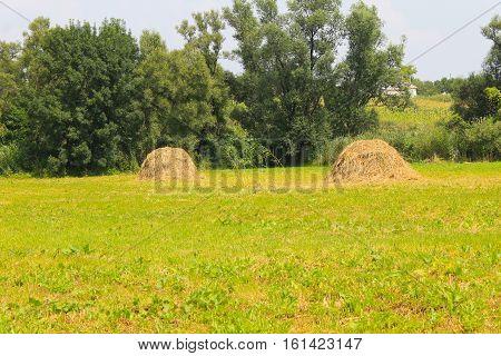 Haystacks on the green meadow. Summer landscape