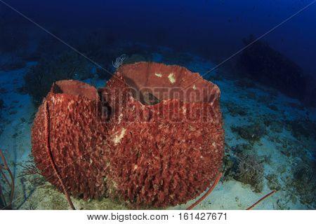 Coral reef underwater in ocean