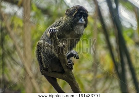 An apprehensive monkey sitting on a branch.