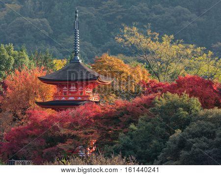 Chureito Pagoda architecture with autumn season in the park at Kyoto Japan Autumn season.