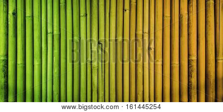Bamboo texture background, faded bamboo fence wall, aging process bamboo