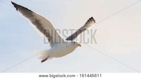 Beautiful moment of seagull while flying in the sky