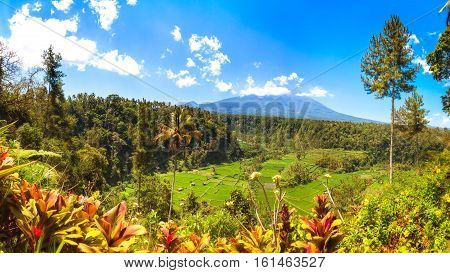 Rice Fields in the Valley with Mount Agung in the Background, Bali, Indonesia