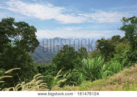 Tropical rainforest landscape in Lam Dong area Vietnam