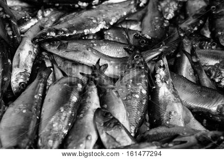Fresh Raw Herring Fish In The Market. Background Closeup. Toned. Bw, Black And White.