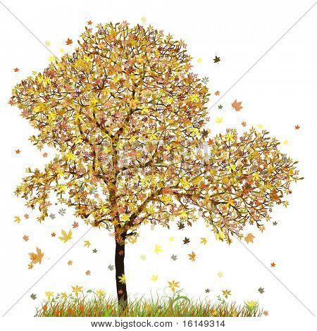 autumn tree with white background