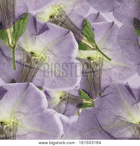 Petunia. Colorful texture of pressed dry flowers. Seamless pattern for continuous replicate. Beautiful photo collage.