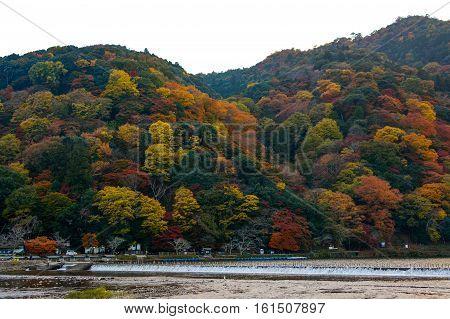 Katsura River and Mount Arashi in full autumn color in the Arashiyama district of Kyoto, Japan