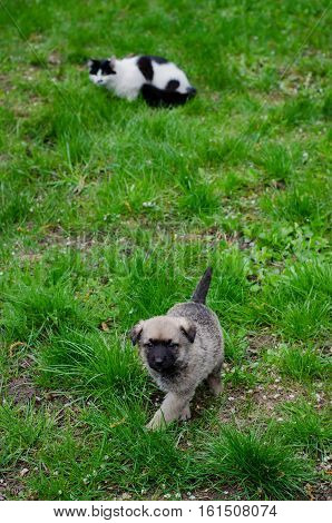 Cat And Puppy In Green Grass