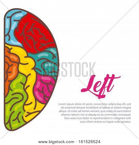 human brain left hemisphere icon over white background. colorful design. vector illustration